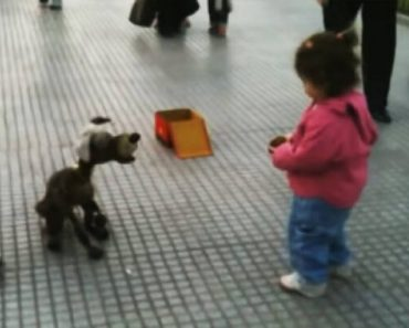 toddler and dog puppet
