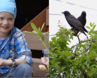 crows feeding