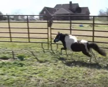 disabled mini horse