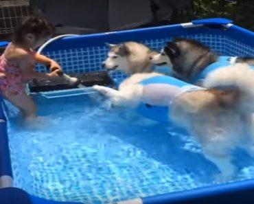 husky pool party