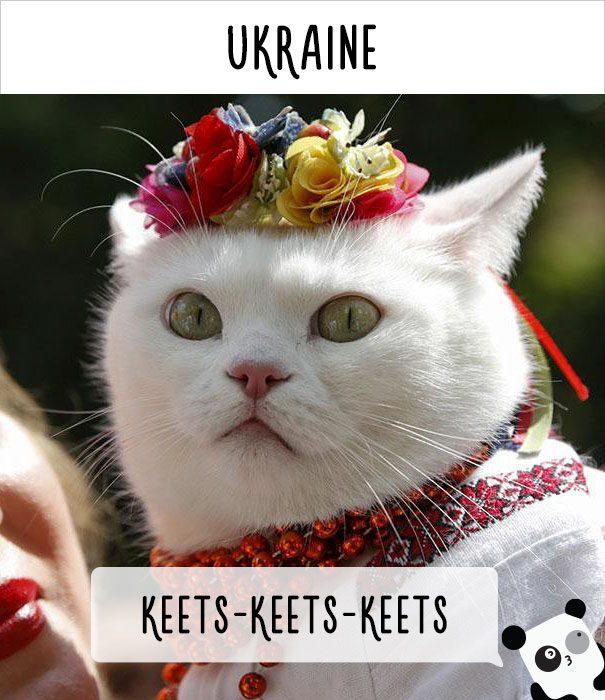 cat calling in different languages 10