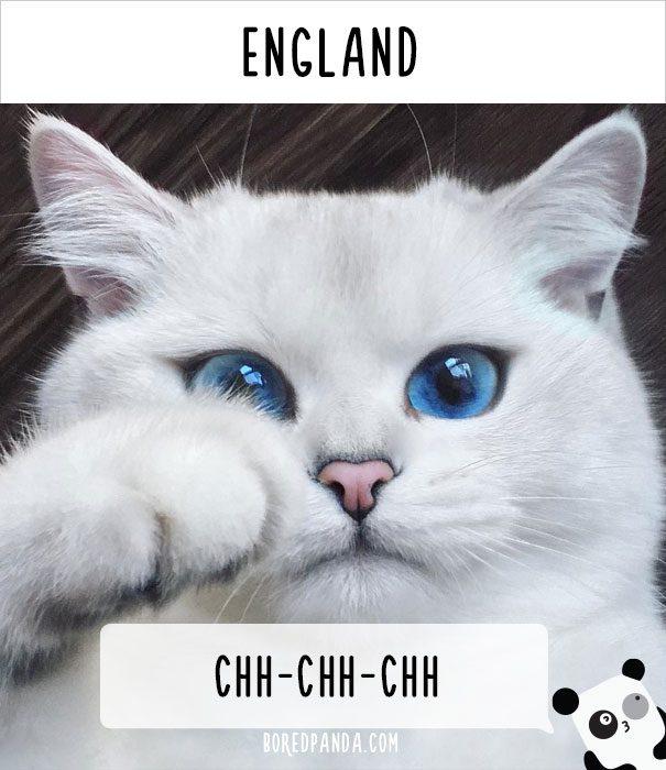 cat calling in different languages 16