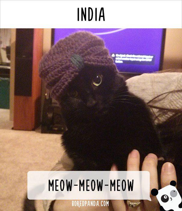 cat calling in different languages 18