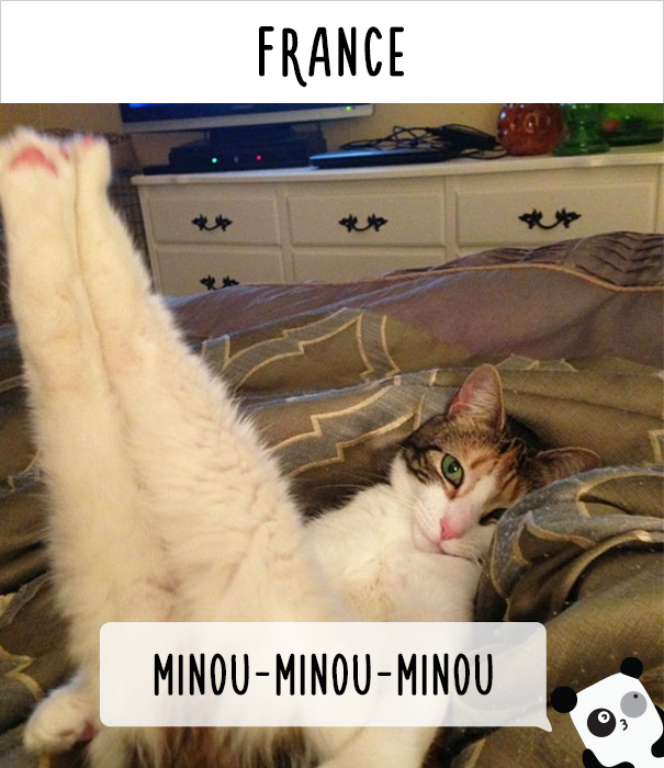 cat calling in different languages 19