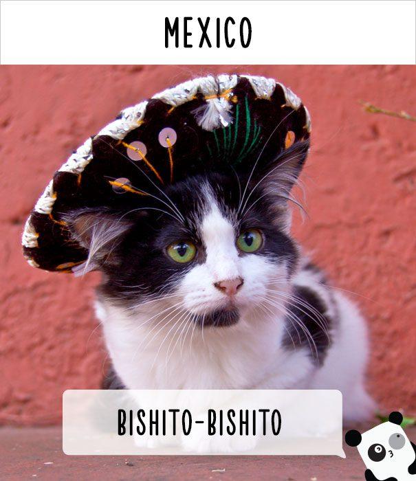 cat calling in different languages 22
