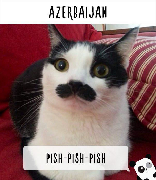 cat calling in different languages 24