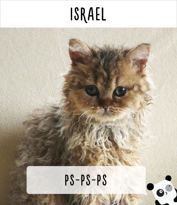 cat calling in different languages 25