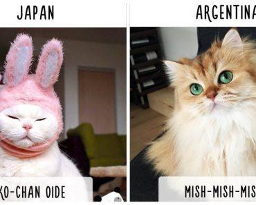 cat calling in different languages