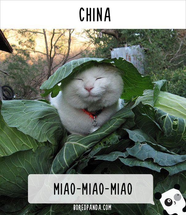 cat calling in different languages 5