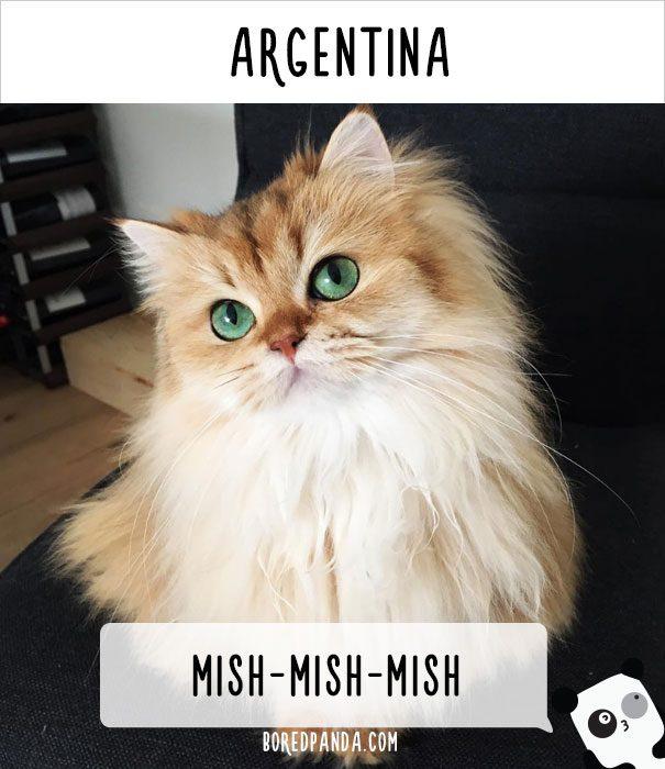cat calling in different languages 8