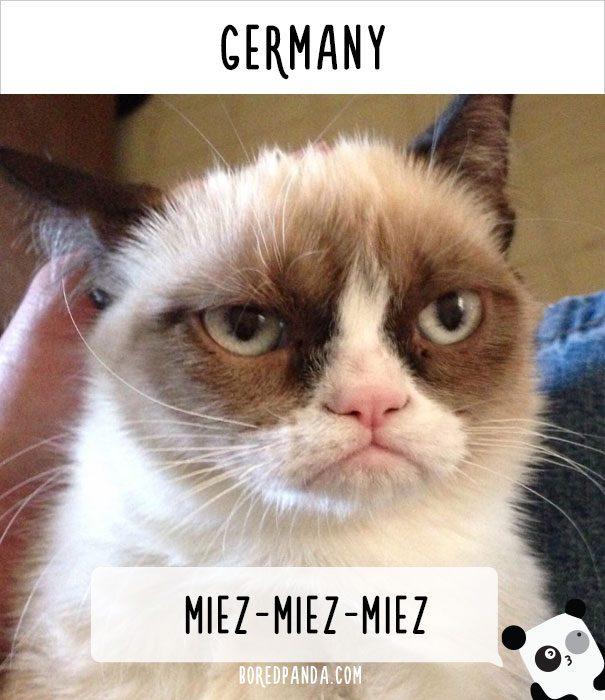 cat calling in different languages 9