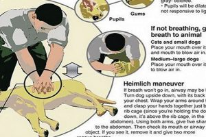 cpr for dog