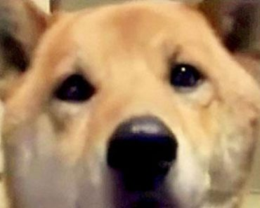 dog barks softly
