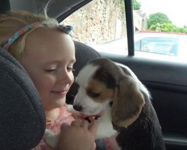 puppy family member