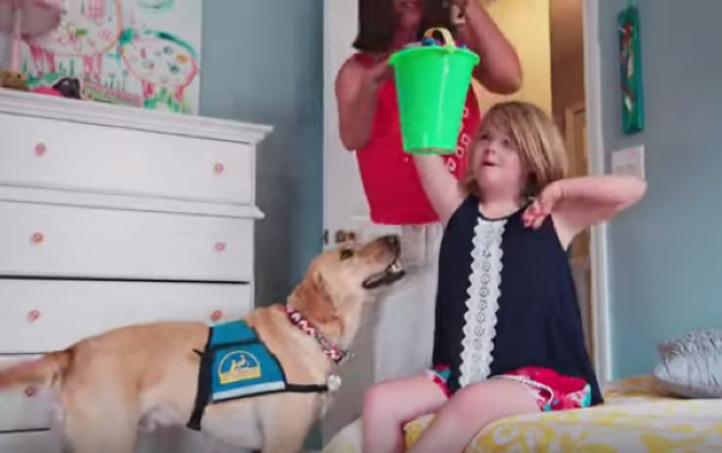 service dog commercial