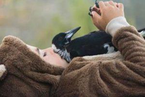 Magpie rescued