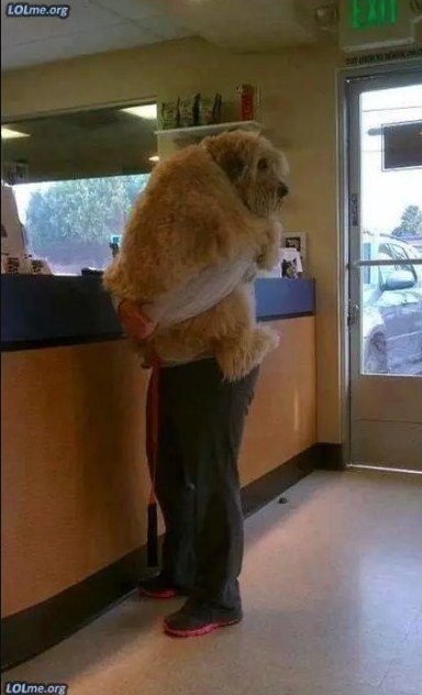 big dog breeds