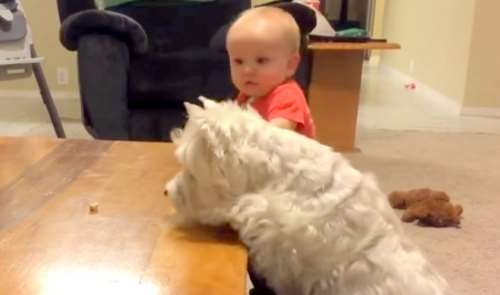dog and baby showdown