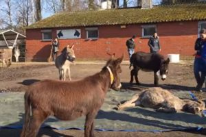 donkey bid goodbye to friend