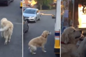 golden retriever gets ice cream