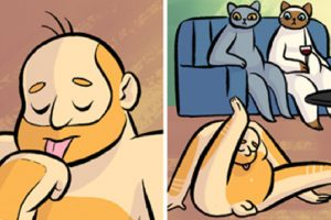 if cats and humans switched roles