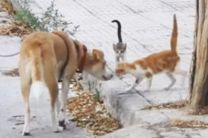 rescue dog helps stray cats