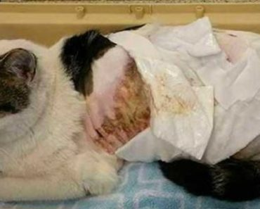 teen poured boiling water on cat