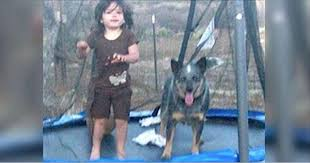 toddler rescued by her dog