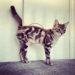 pet first aid kit cat