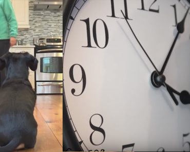 crusoe dachshund dinner time