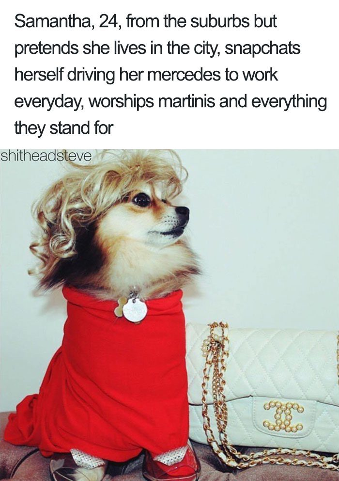 The Next 100 Years >> 30 Hilarious Dog Personality Profiles That Are Like Many ...