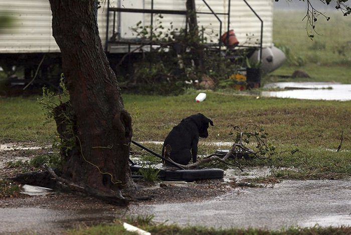 dogs tied up in the flood
