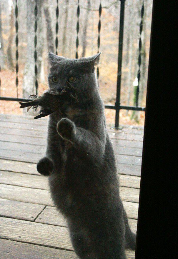 dramatic pets