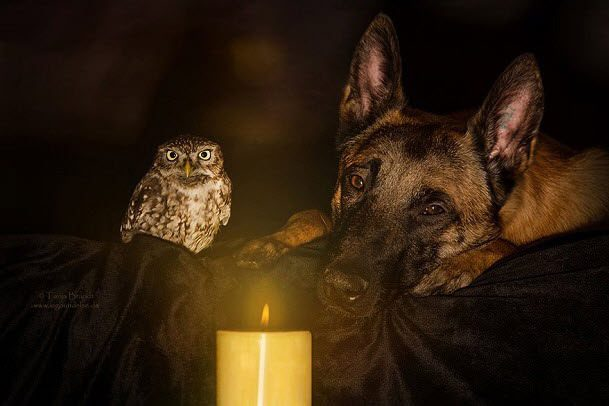 Adorable owl and dog are best friends