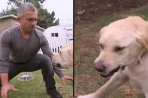Cesar Millan dog bite