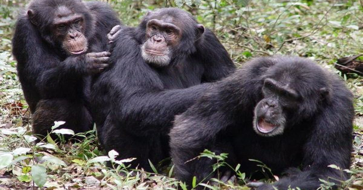 Funny Monkeys Love To Do Flea Picking