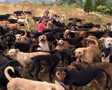 Land of stray dogs