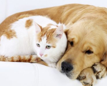 When emergency pet hospital may help