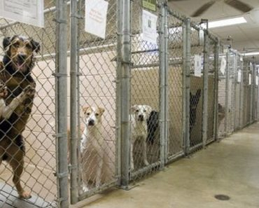 adopting from shelter