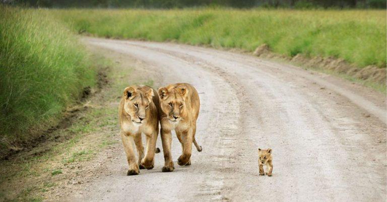 animal family photos