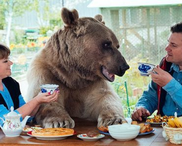 couple adopted bear