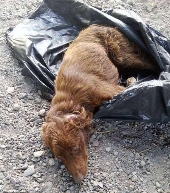 dog in garbage bag