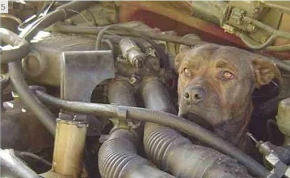 dog stuck engine truck