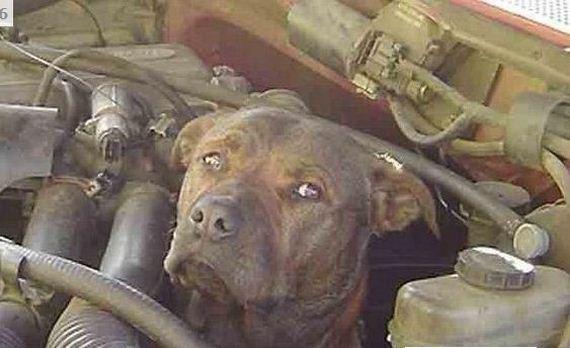dog stuck engine truck