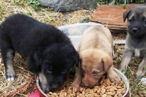 homeless dogs starving