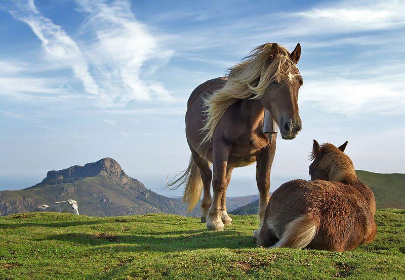 horse life