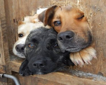 inquisitive dogs