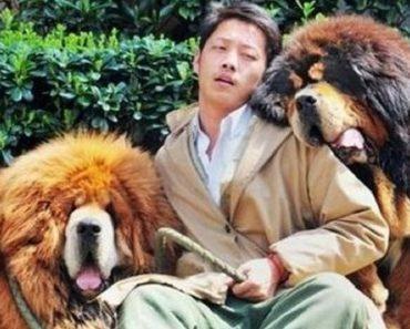 priciest dog world