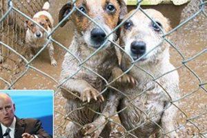 puppy mills ban sale