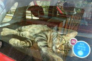 street cat adoption